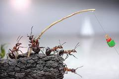 Fascinating Life of Ants (28 pics)